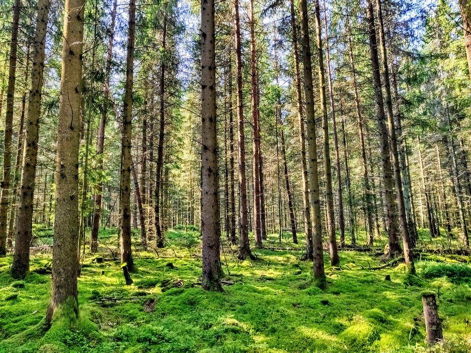 biomassa CO2 uitstoot